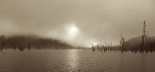 Submerged trees at Lake Pieman