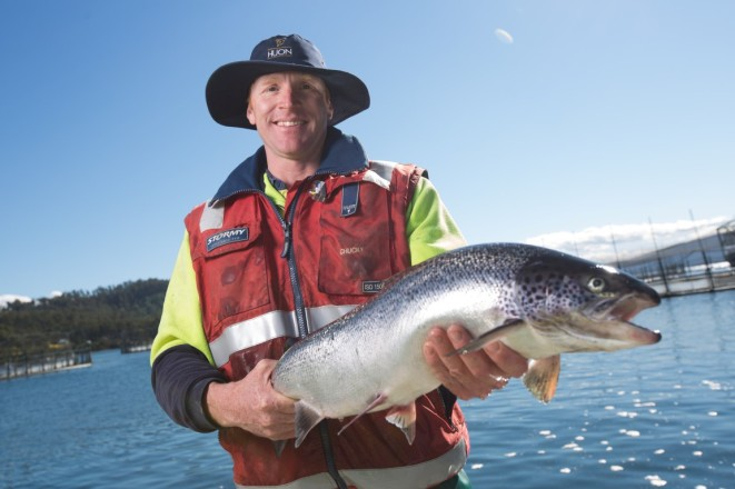 Supporting the marine industry: Huon Aquaculture employee with a healthy Tasmanian salmon