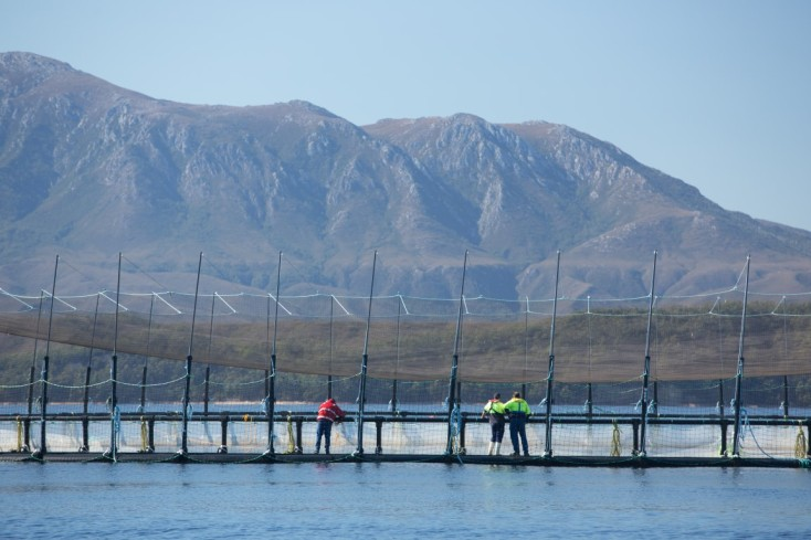 Huon Aquaculture employees tending to a fortress pen