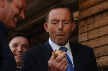 PHOTO: Neil Richardson -  PM Tony Abbott bites into a fresh onion at the announcement of  TFES extension at Charlton Farm Produce at Moriarty - Courtesy of The Examiner