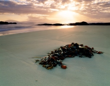 Marinova use locally sourced materials such as this beachcast seaweed from a Tasmanian beach.