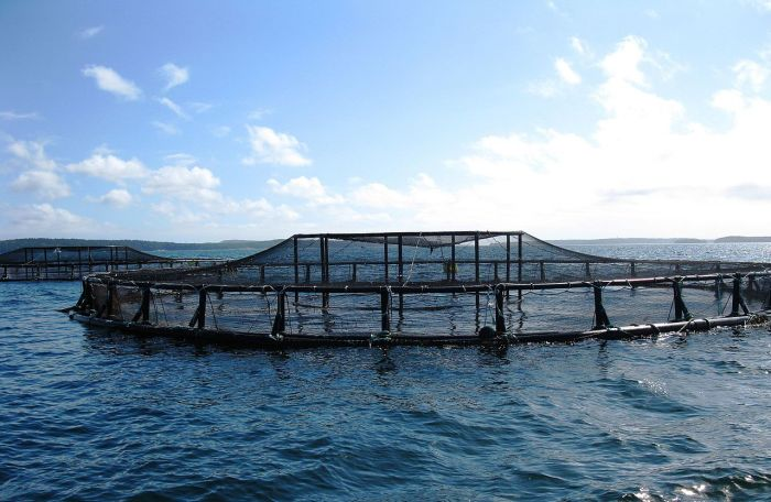 An_aquaculture_pen_in_the_ocean_off_the_coast_of_Maine