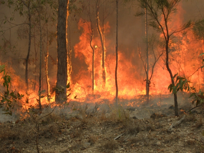 Bush_fire_at_Captain_Creek_central_Queensland_Australia.