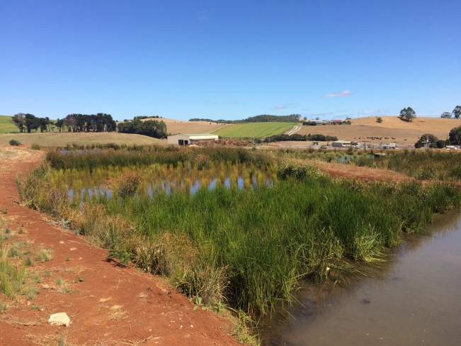 The wetland treatment system designed by Syrinx Environmental at the Burnie Waste Management Centre.
